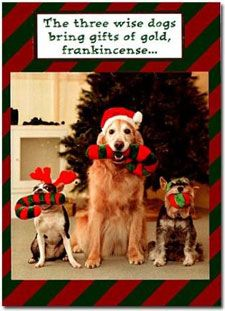 image result for funny dog christmas cards