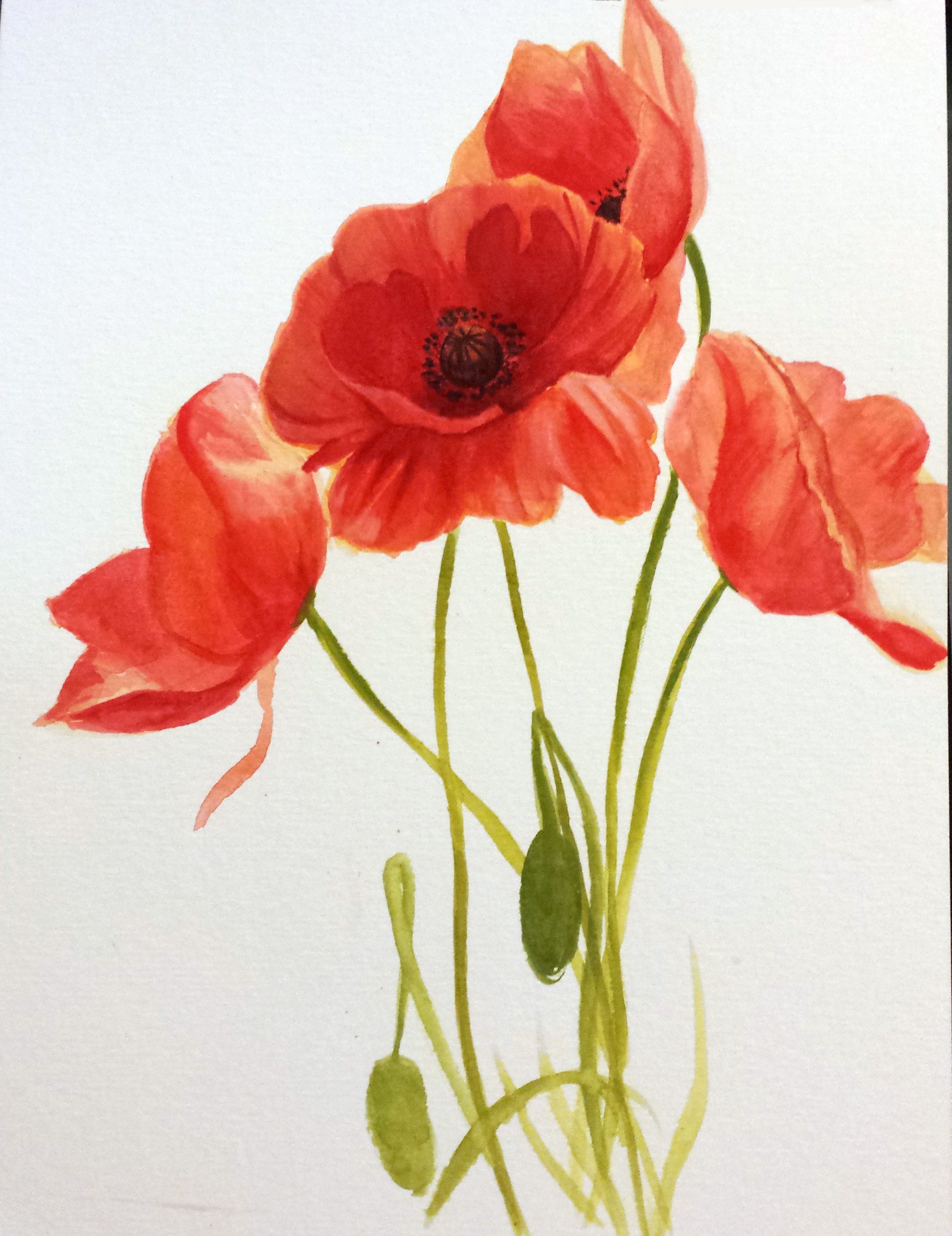 April 21st Flower Week Day 1 The Poppy Flower Sketchdaily