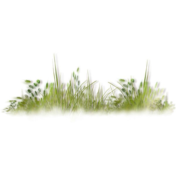 Nld Grass Cluster Png Liked On Polyvore Featuring Flowers