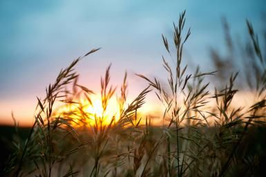 A Lammas Prayer to Honor the Grain: Lammas is the time of the early grain harvest.