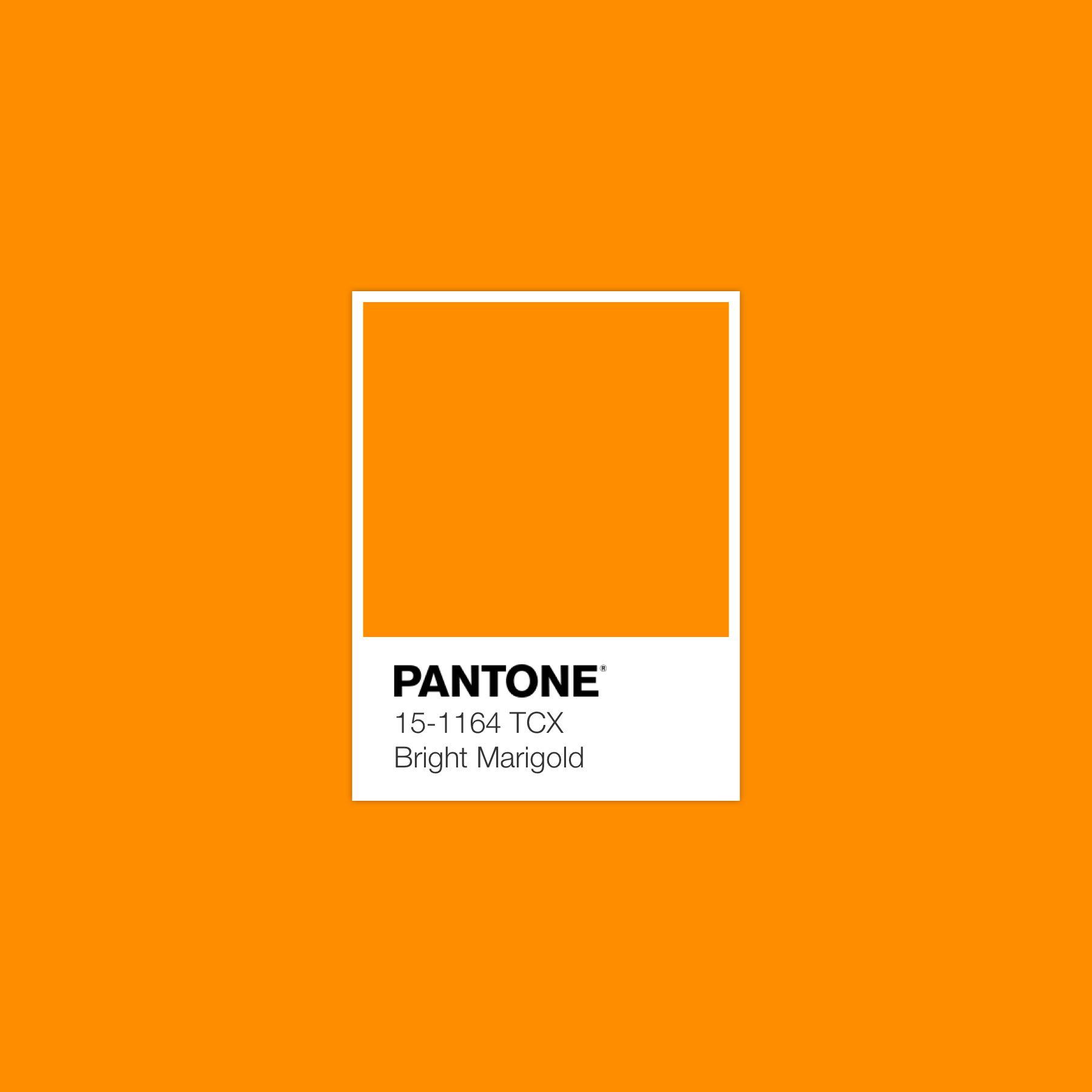 Pantone Bright Marigold #luxurydotcom | Pantone colour palettes, Pantone,  Pantone palette