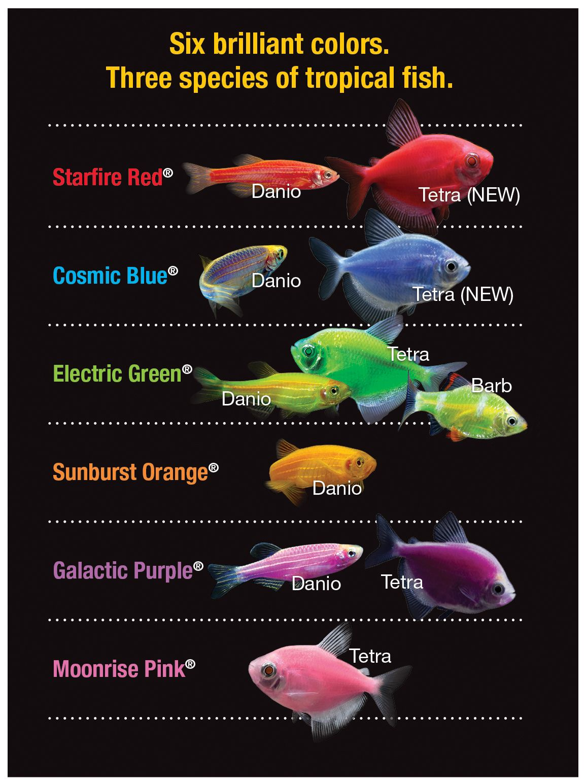Glofishchart 1155 1545 aquarium related for Tetra fish tanks