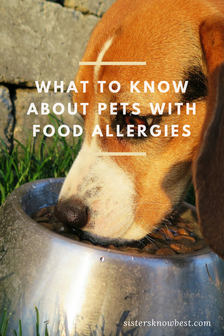 Pet Food Allergies Symptoms and Solutions Food animals