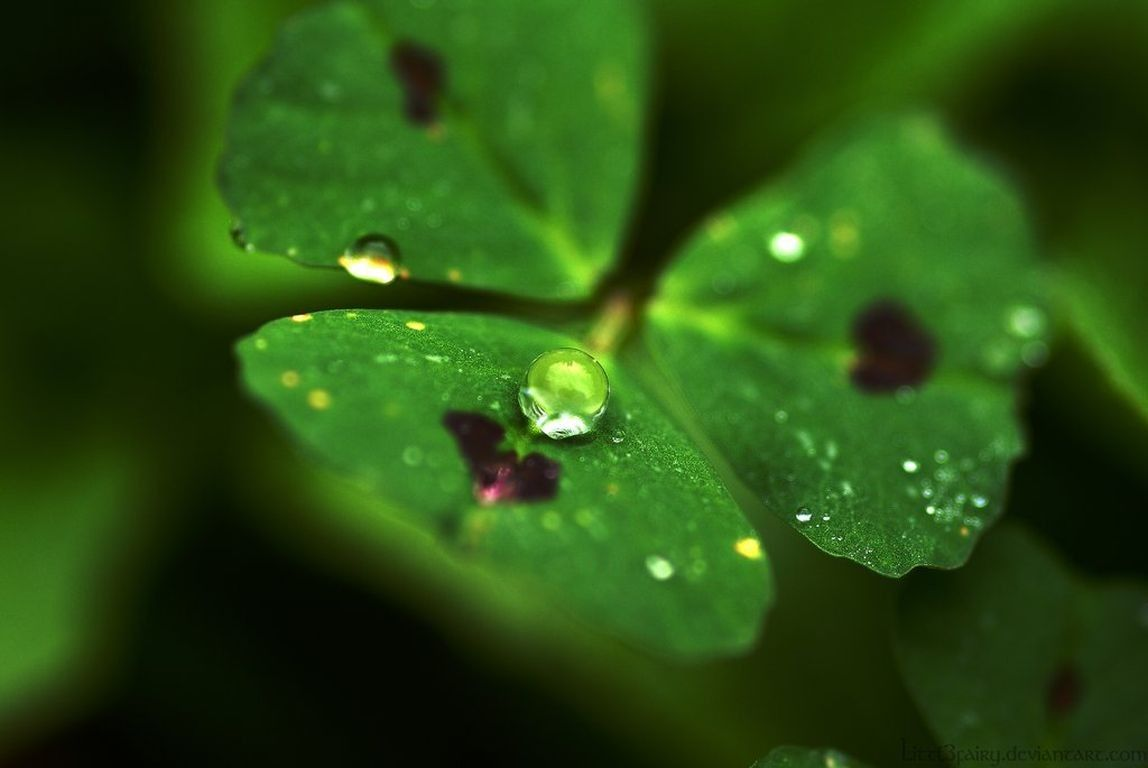 Image result for dewdrops on grass, leaves and shamrock