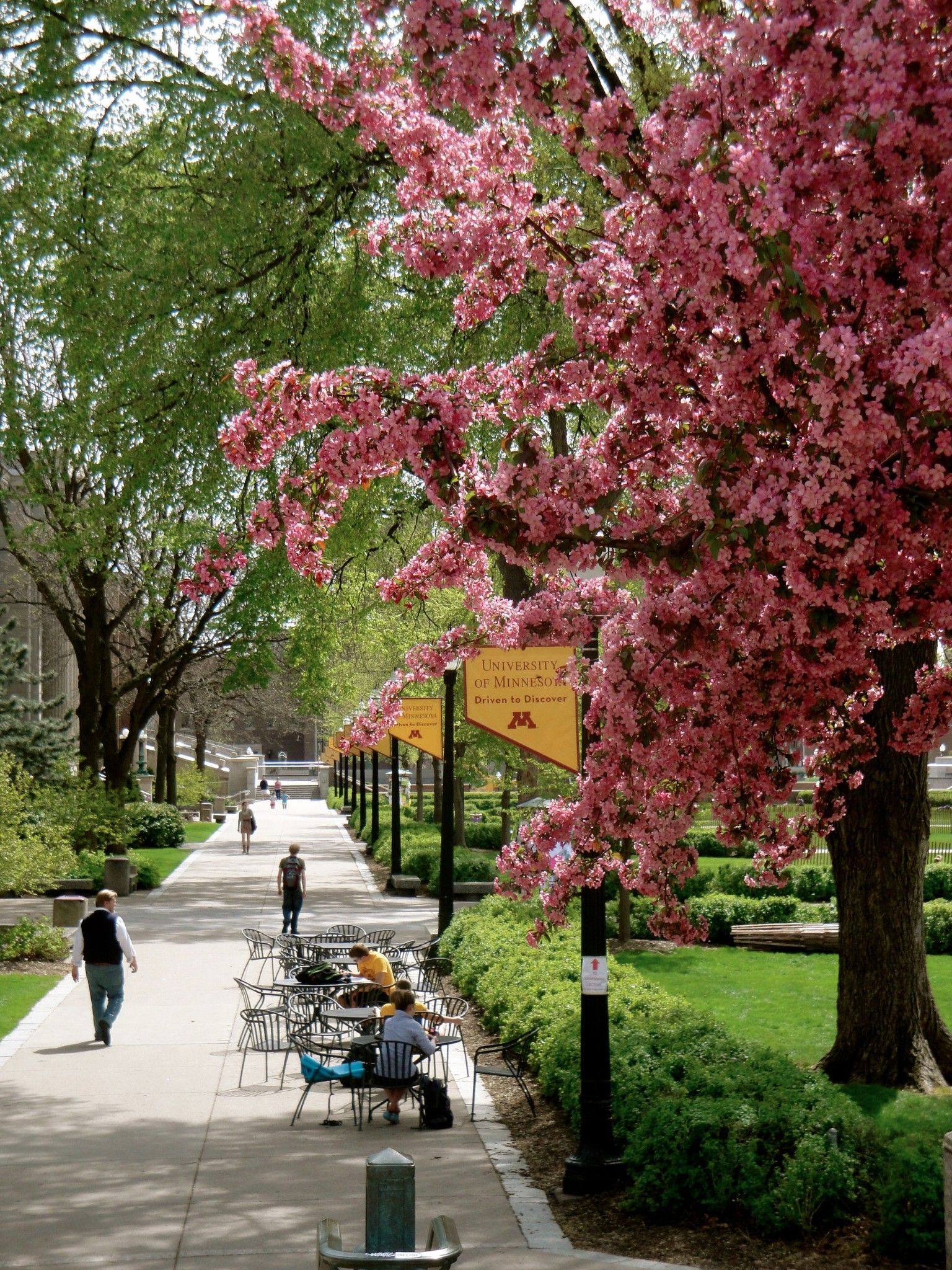 Beautiful spring day at the university of minnesota