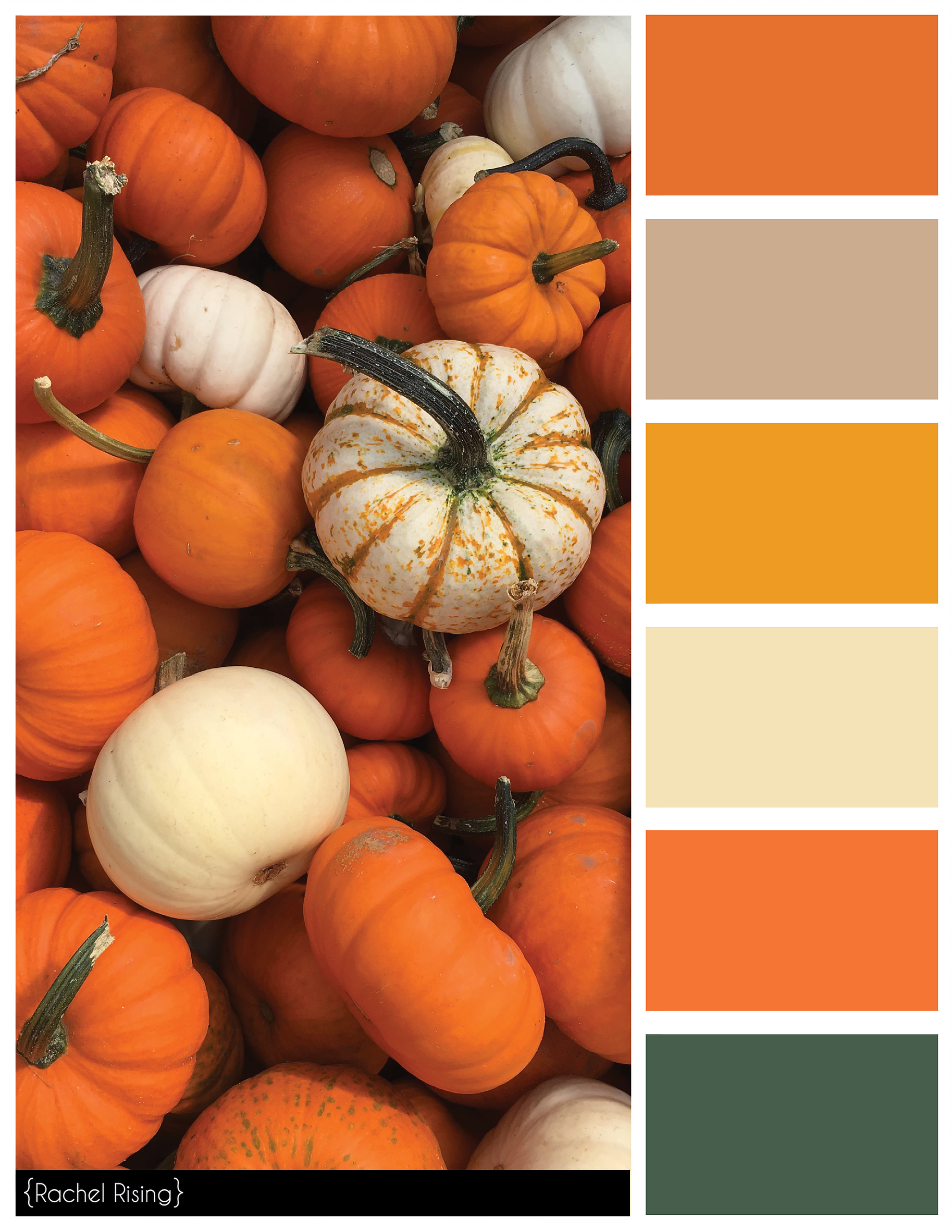 Rachelrisingdesign In 2019 My Future Home Paint Color Schemes