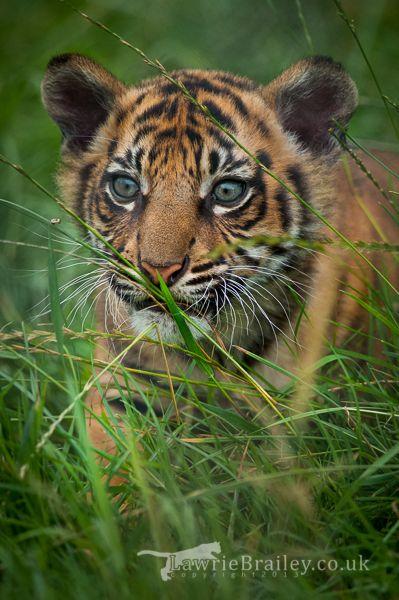 Through the Grass by Chikrata on DeviantArt