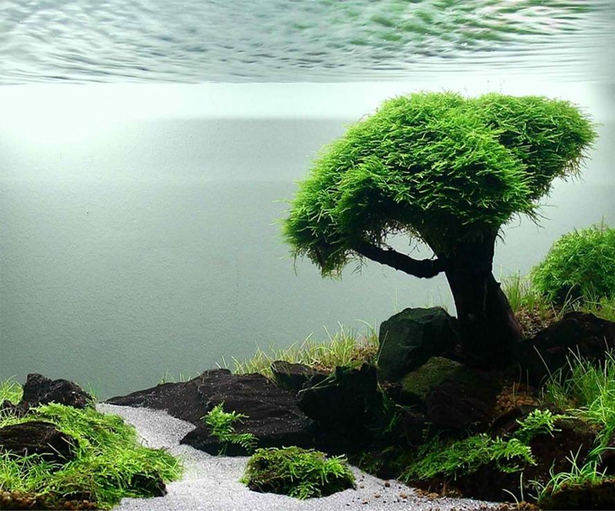 Best Java Moss Tank Ideas Aquascape Paludarium Blog Aquascape Aquascape Design Floating Plants