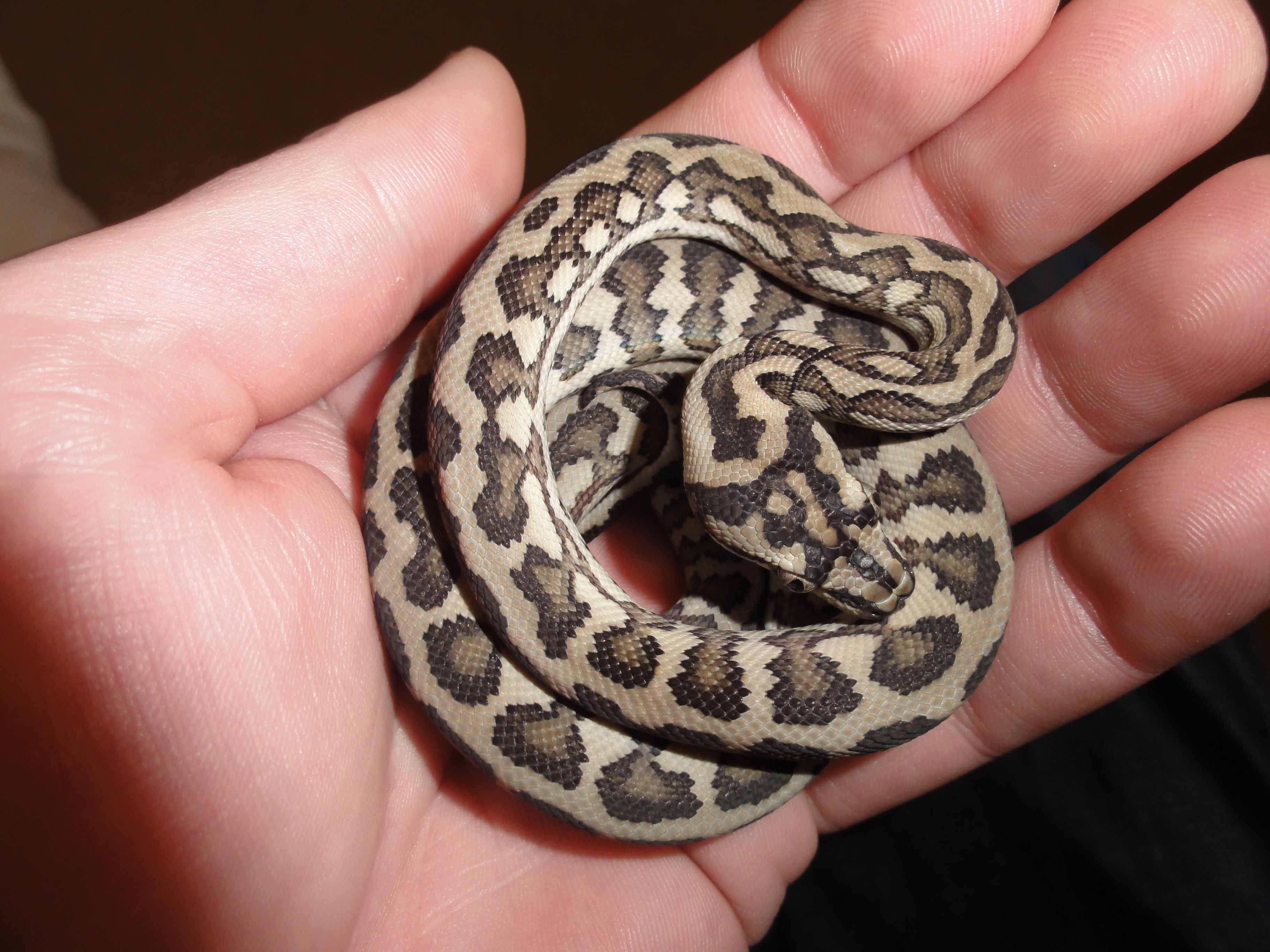 Pin On My Love Of Snakes 3