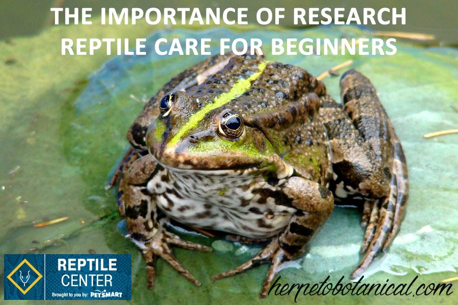 The Importance of Research ReptileCare (With images