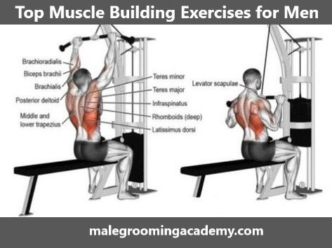 top muscle building exercises fitness health life love
