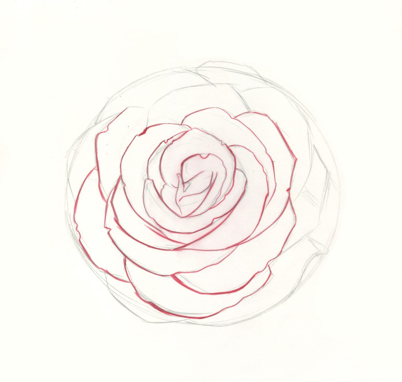 How to Draw Roses | An Easy and Complete Step-by-Step Guide