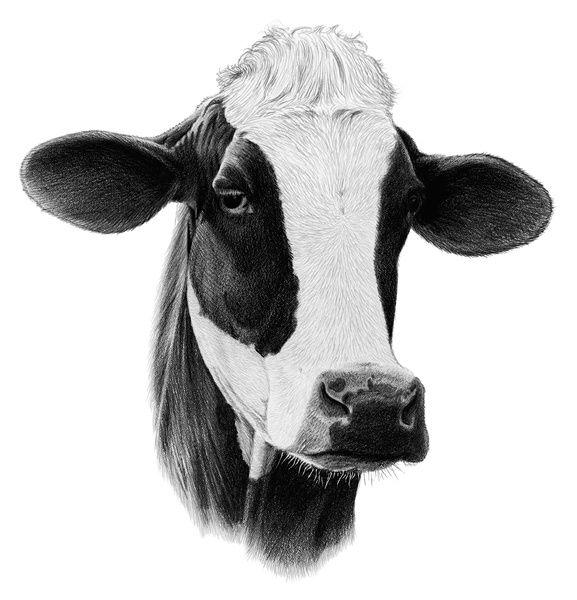 Dairy Cow Head Clip Art Gallery Baby Boy Room