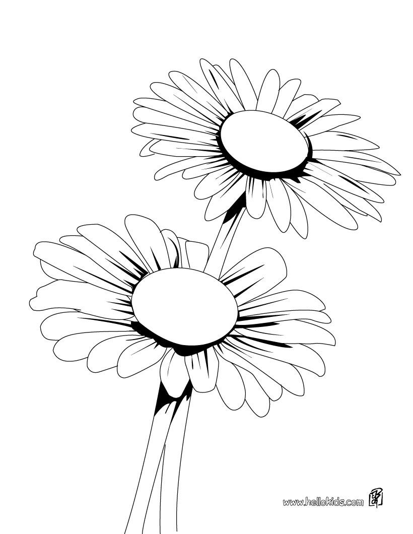 Daisy Flower Coloring Pages Portraits
