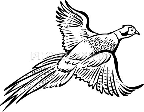 Dog And Pheasant Google Search Bird Coloring Pages Drawings