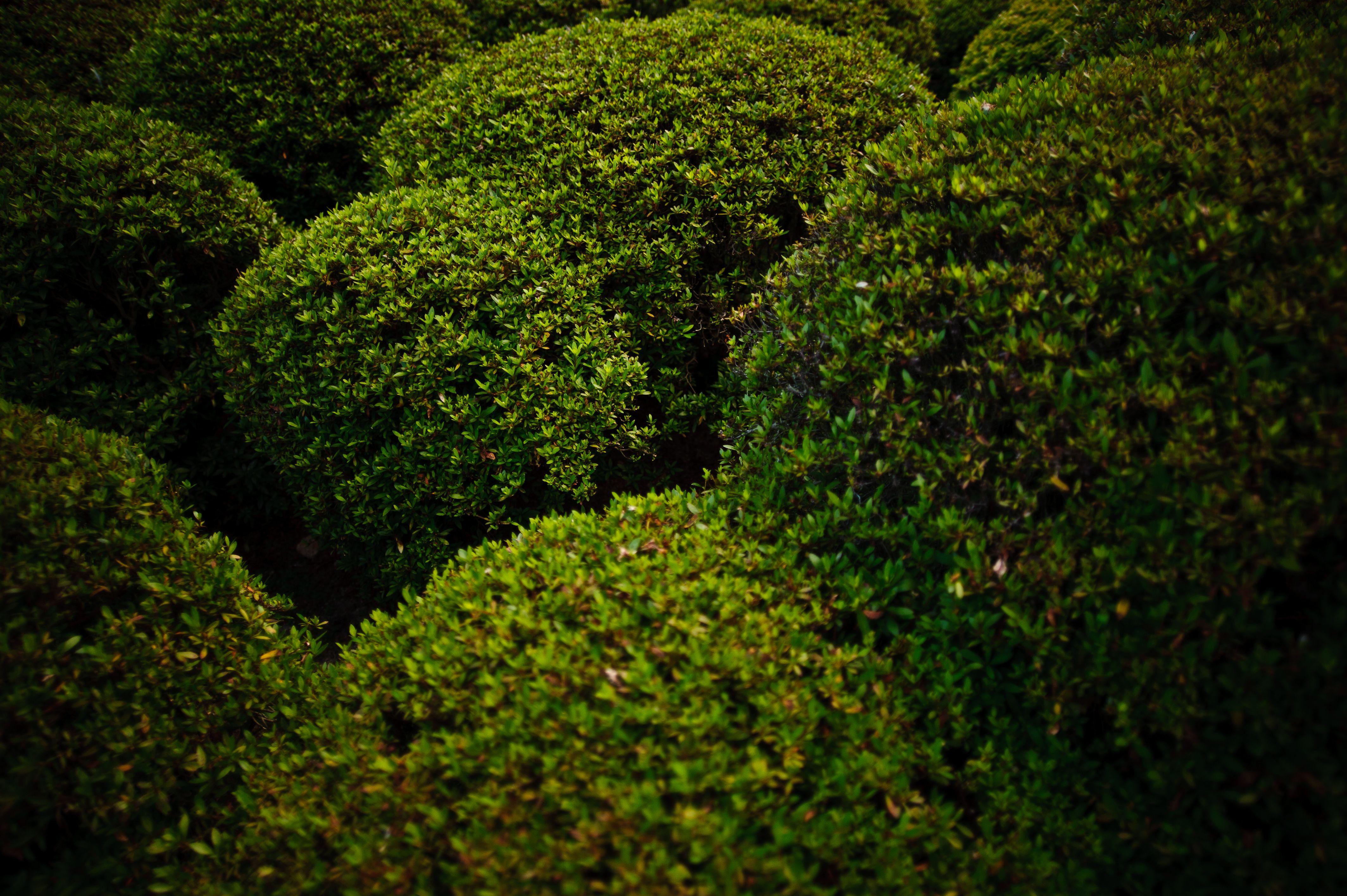 Afbeeldingsresultaat voor bushes Elementen Pinterest Shrub