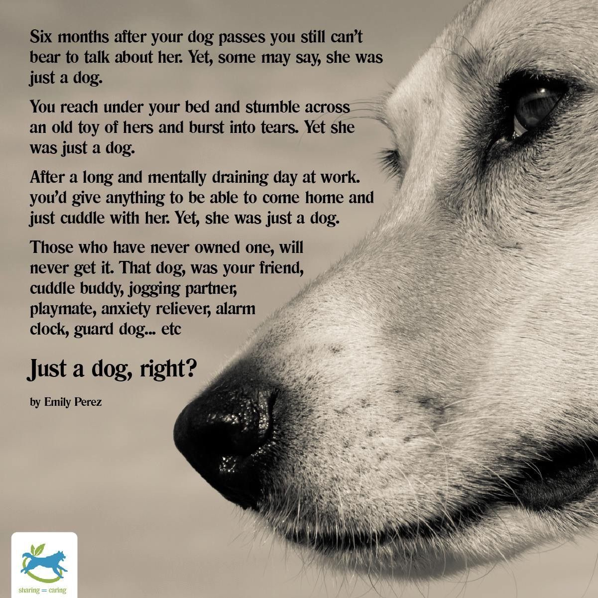 Pin By Animal Hospital Of Statesville On Fur Kids Dog Quotes Dog Poems Dogs