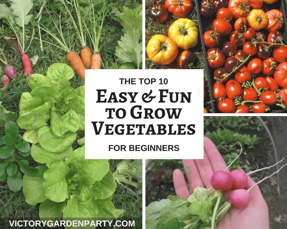 easy garden vegetables the beginner