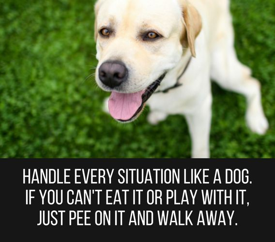 Dog Smile Quotes Smile Quotes Happiness Quotes Smile Quotes