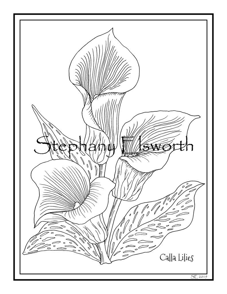 Calla Lily Flowers 8 1/2 x 11 PDF Printable Instant