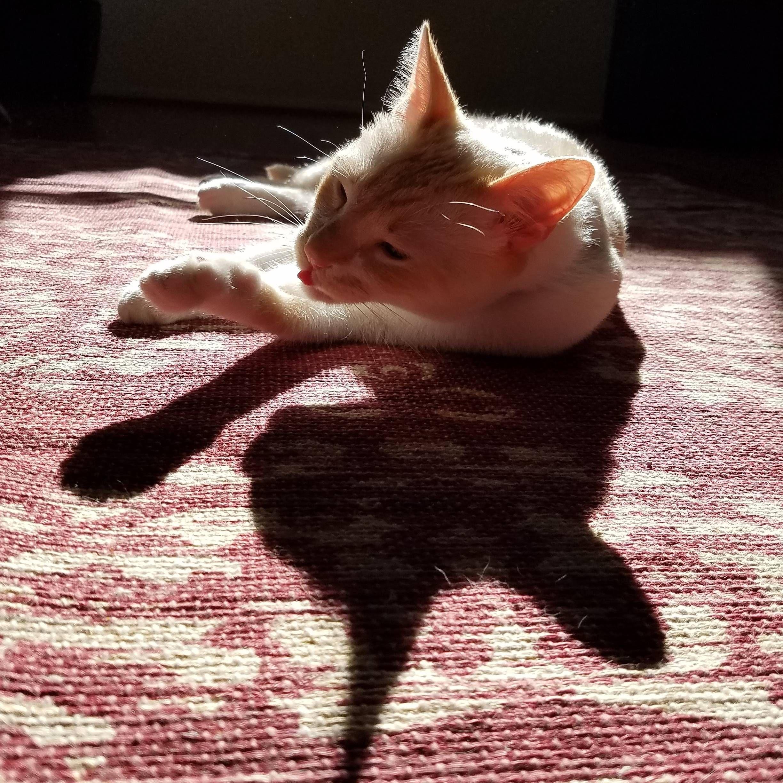 Olaff still likes warm rugs cats pinterest cat