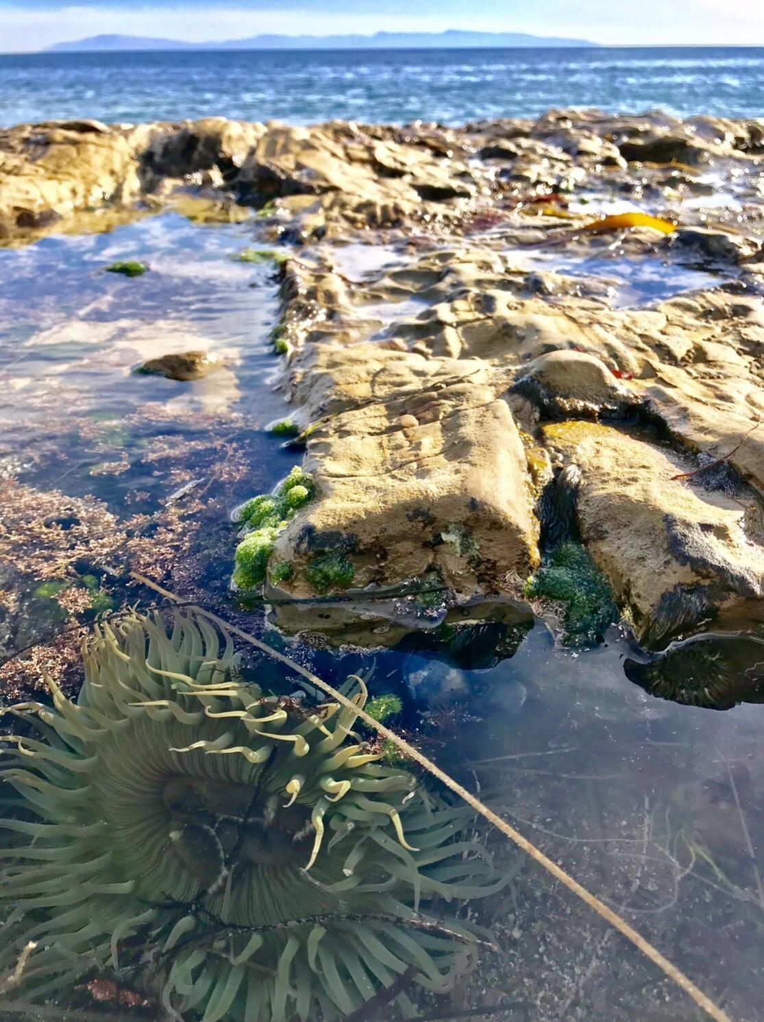 Tide Pools Of Natural Bridges State Beach Santa Cruz Ca C
