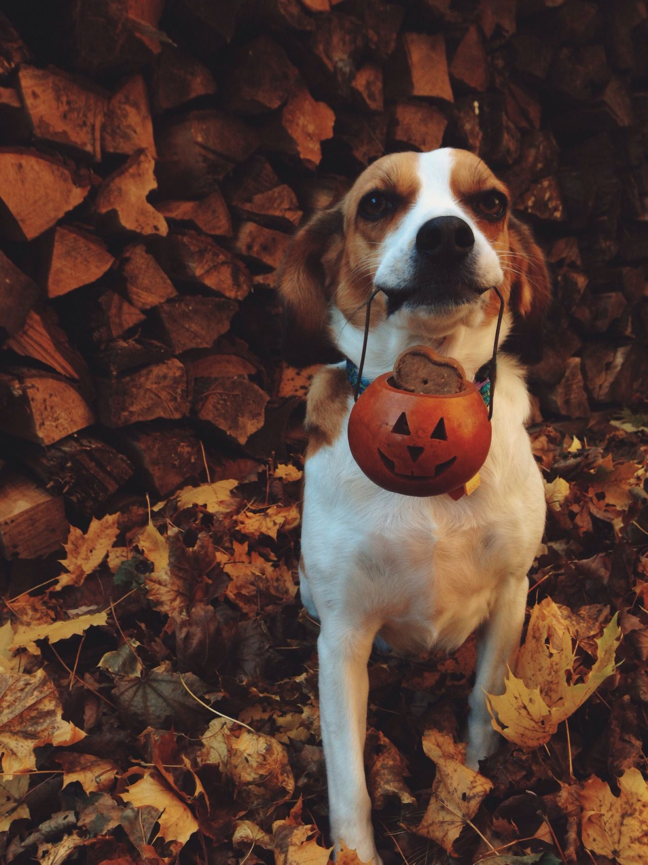 "softautumnwhispers: "" autumnfeelslikehomexo: "" Give him all the treats "" """