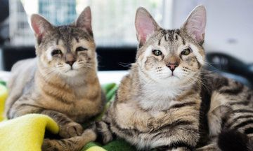 Stray Kittens Born Without Eyelids Get A Second Chance Thanks To Strangers