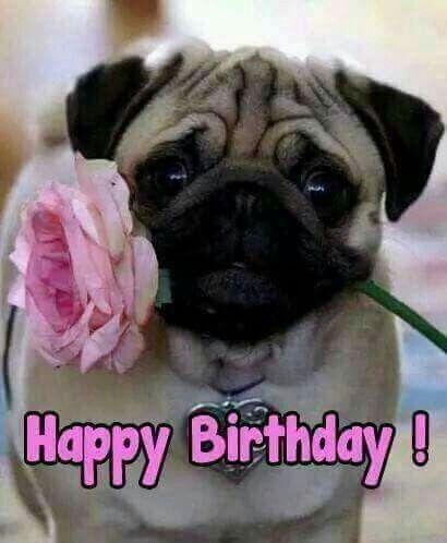 Birthday Pug Verjaardag Mopshond Verjaardag Dieren Verjaardagskaart