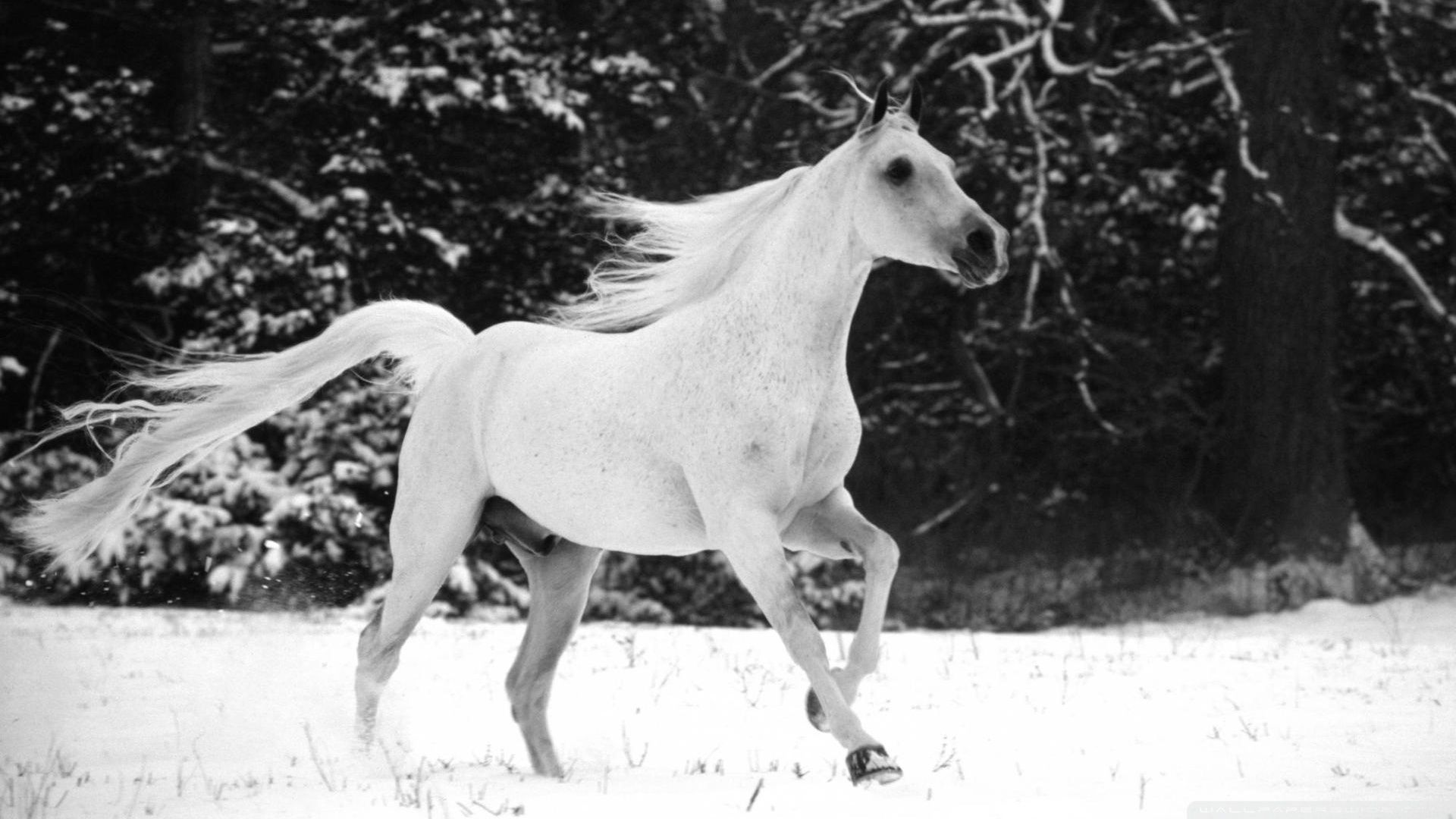Top Wallpaper Horse Winter - ebd5796d05f595023214e6babd845223  Graphic_394274.jpg