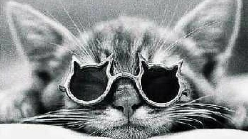 The internet would not be fun without cats in glasses, it's a fact, deal with it. From cats posing as pinup girls to cats riding on skateboards, cats pretty