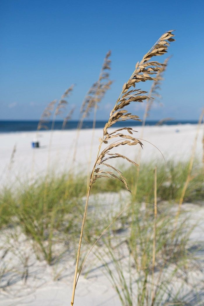 Head To The Alabama Gulf Coast To Get Away From The Snow
