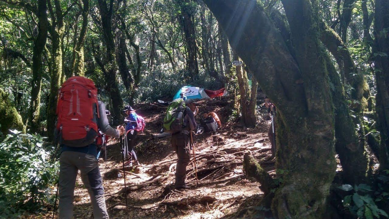 pendakian gunung slamet via dipajaya pemalang mdpl travel