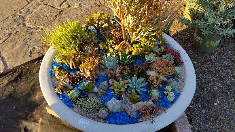 H Nursery Giant Bowl In Lakewood Front Yard Rock Garden