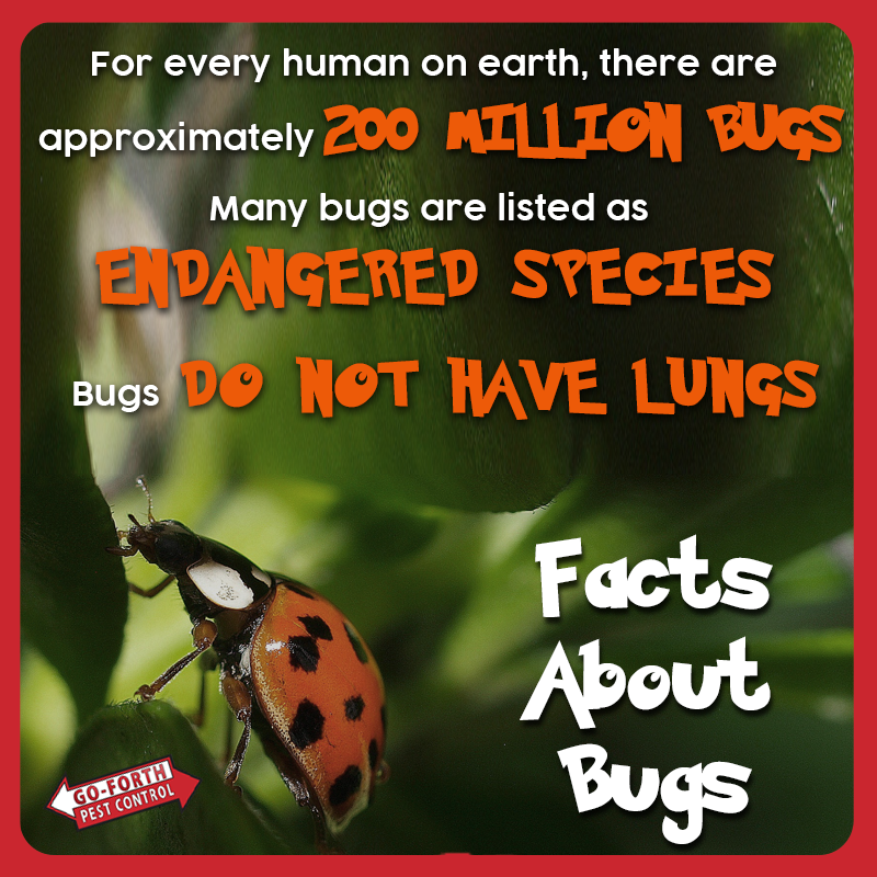 Facts about bugs. Pest control, I am awesome, Facts