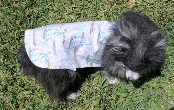 Dog Shirt  Toy Breed White Sky Blue & by BloomingtailsDogDuds, $21.95