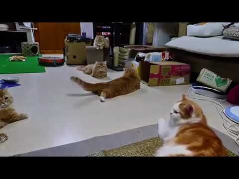 Videos For Cats To Watch Laser