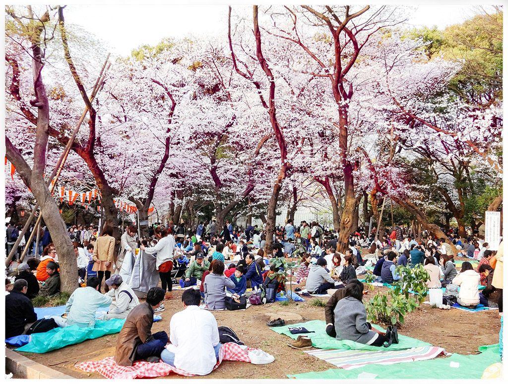 Image result for japanese sakura festival hanami