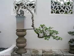 Bildergebnis für bonsai kaskade