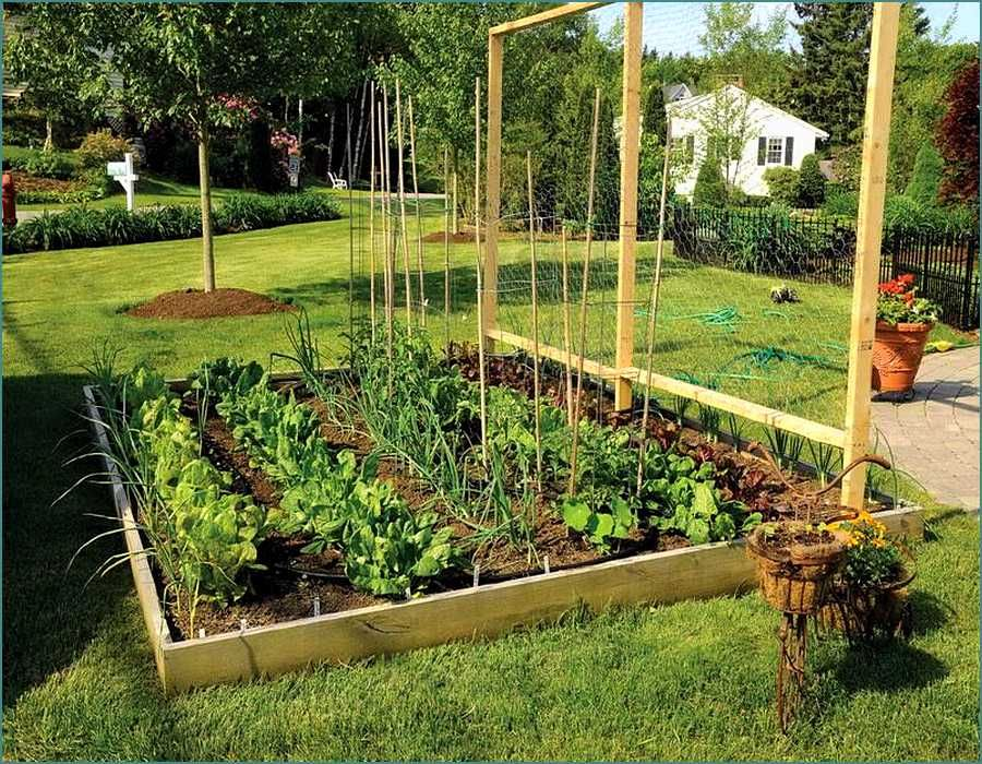 Triyaecom Backyard Edible Garden Ideas Various design