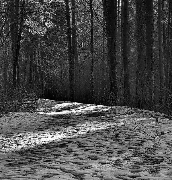 black and white #Danger #icy #pathway in forest Leif Sohlman
