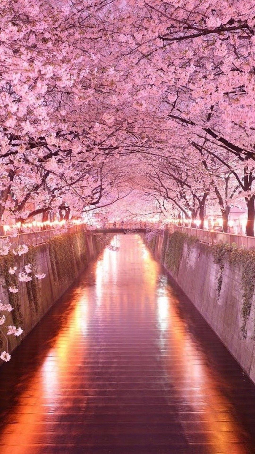 Cute Pink Phone Wallpapers In 2020 Flowers Photography Wallpaper Flower Iphone Wallpaper Photography Wallpaper