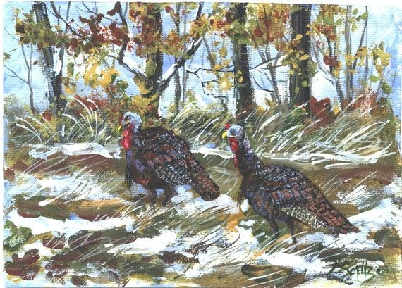 TWO TOMS Thanksgiving turkey  5x7 wildlife by jimsmeltzgallery