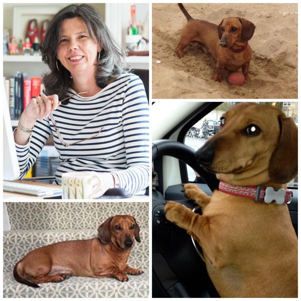 Helen And Boris Missing In Hertfordshire Dachshund Long Black
