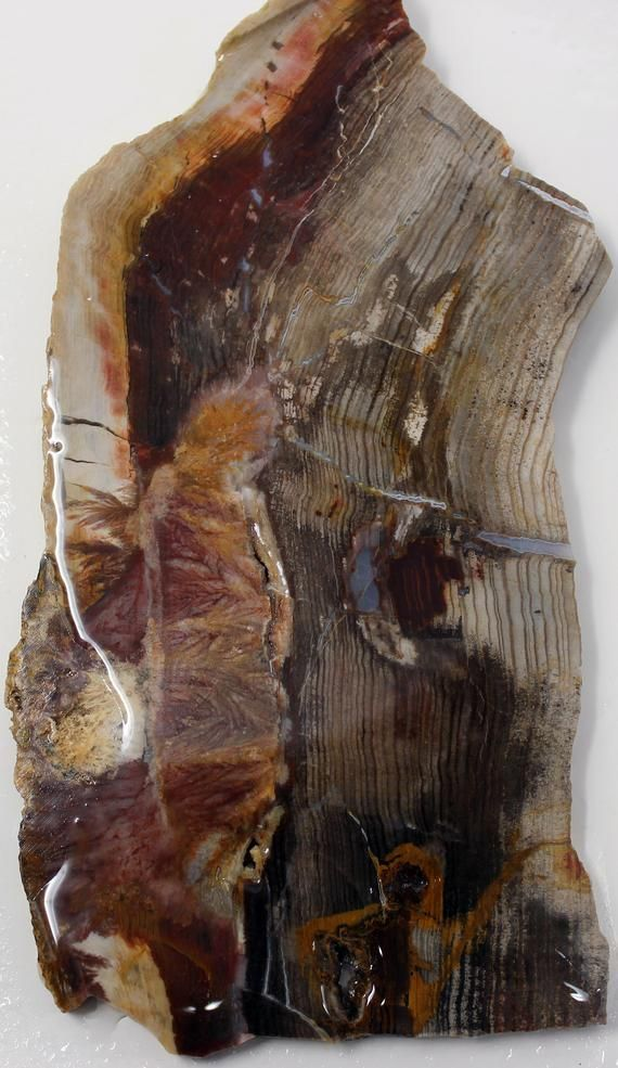 Mystery Estate Sagenite Plume Petrified Wood Slab Fossil Wood Lapidary Stone Slab Agate J Mystery Estate Sagenite Plume Petrified Wood Slab Fossil Wood Lapidary Stone Sla...