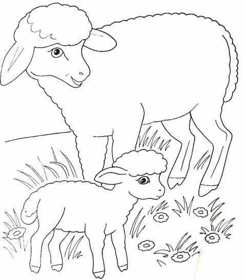 Pin By Vera On Domace Zvierata Animal Coloring Pages Farm Animal Coloring Pages Animal Knitting Patterns