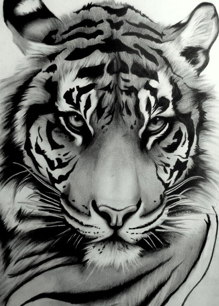 tiger tegning