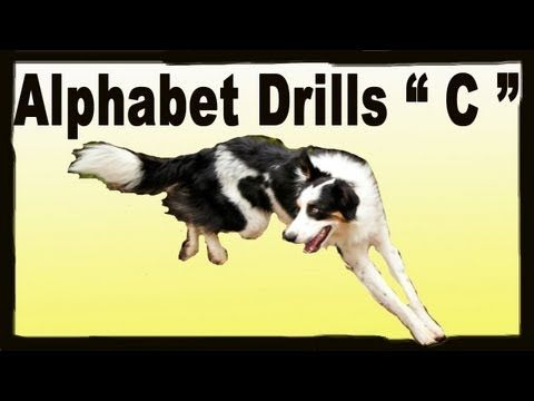 Agility Dog Training Alphabet Drills Pam S Dog Academy Www