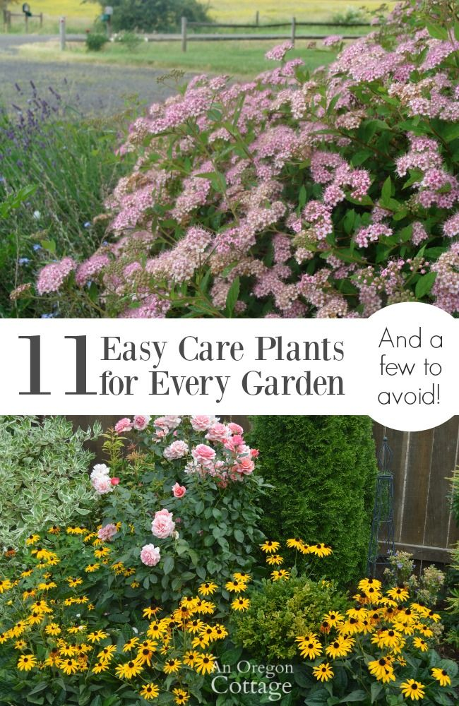 11 easy care plants for every garden and a few to avoid for Easy maintenance plants and flowers