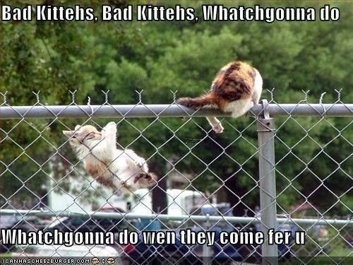 Funny kitten cute kitten - Google 検索